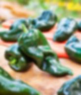 poblano-ancho-hot-pepper.jpg