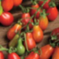 pear tomato.jpg