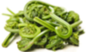 fiddlehead-fern.jpg