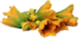 squash flower.png