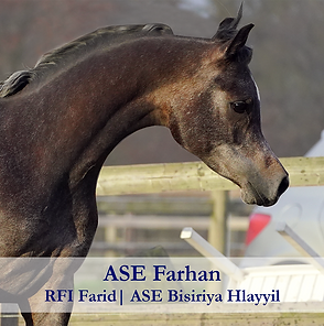 ASE-Farhan.png