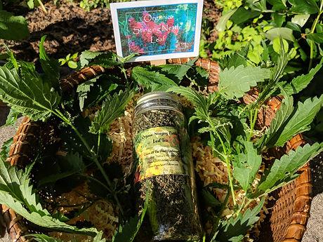 Organic Stinging Nettle Leaf Tea.jpg