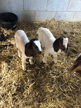 Twin bucklings