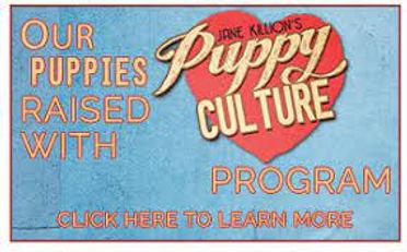 puppyculture.jpeg