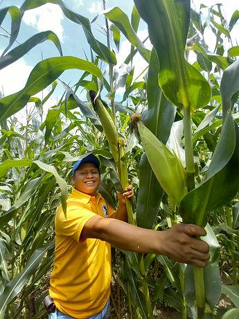 Corn ear larger.jpg