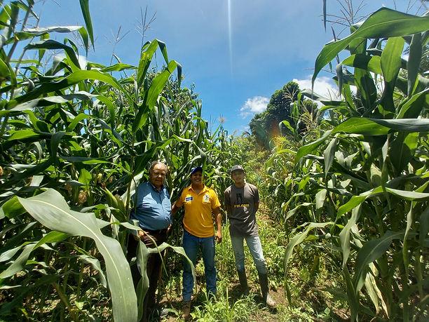 3 in corn field aug 2 2021.jpg