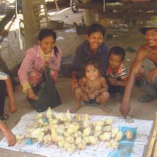 Cambodian Familiy and baby chckens cmyk.