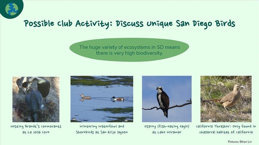 Westview Bird Club