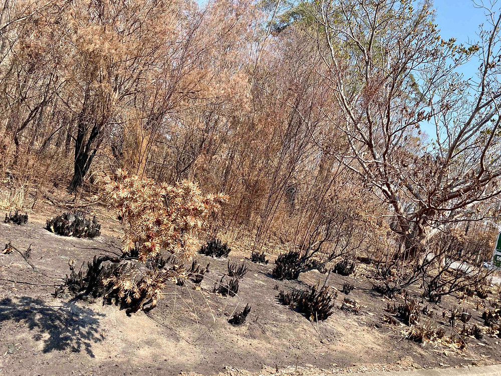 Leftovers after the Bushfires at Taree