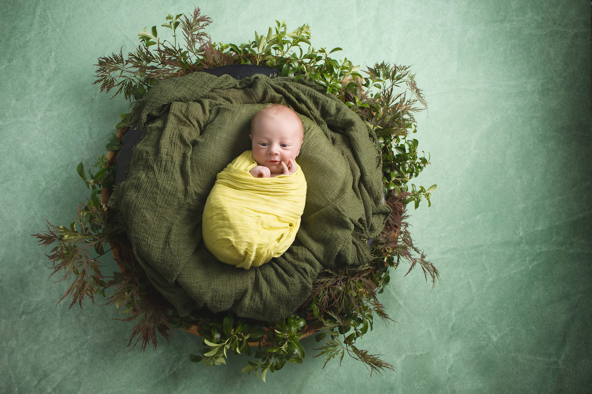 Auckland Studio Newborn Photography