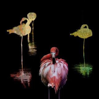 FlamingoerColored_8612_3.jpg
