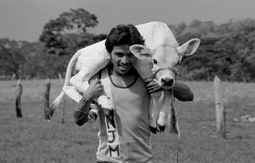 Young cattleman