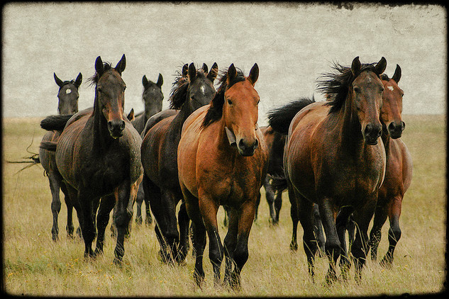 Flock of horses