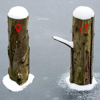 WinterDepression_web.jpg