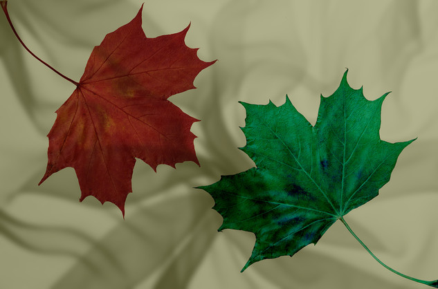 Silky leaves
