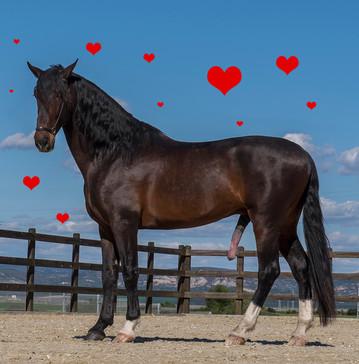Valentine Day greeting