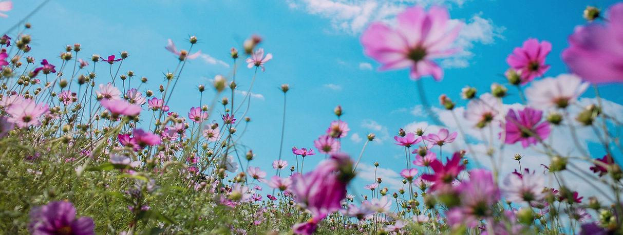 purple-petaled%2520flowers_edited_edited