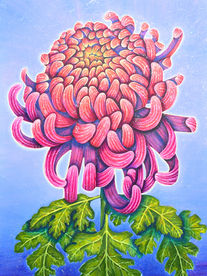 Celestial Chrysanthemum