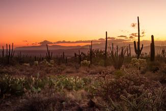 Saguaro Park West7.jpg
