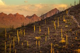 Brown Mountain.jpg