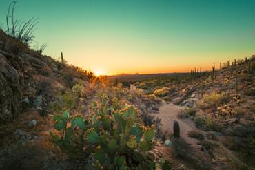 Saguaro National Park West.jpg
