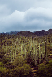 Tucson2.jpg