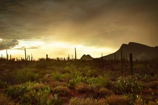 Desert Rainstorm10.jpg