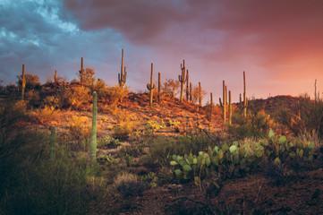 Saguaro Park West.jpg
