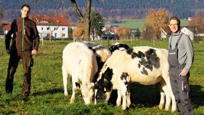 Rinder aus Oberbauerschaft