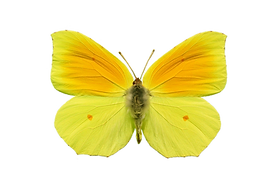 Fotolia_31685497_Subscription_Monthly_M.