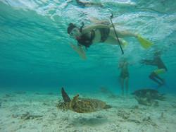 Sea turtle point in Maldives