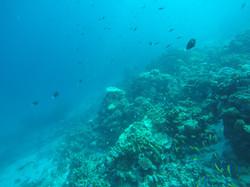 Biyadhoo reef