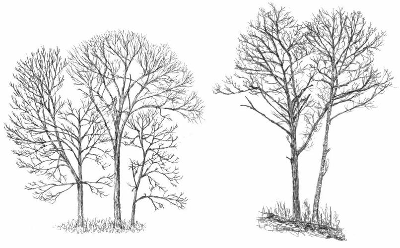 Виды деревьев.бумага, карандаш..webp
