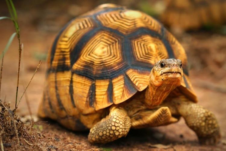 Справочный_материал_черепаха-003.jpg