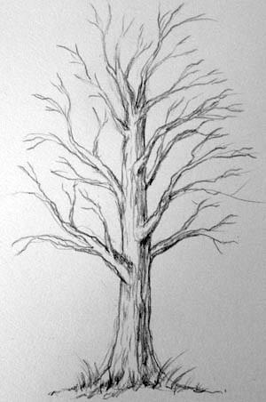 Рисование дерева .2 этап..jpg