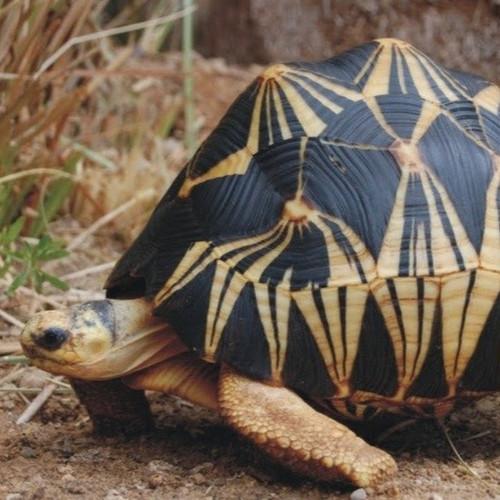Справочный_материал_черепаха-004.jpg