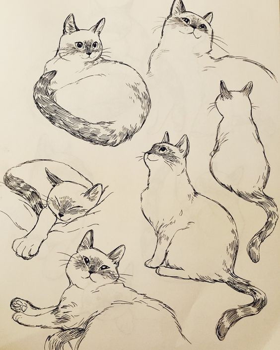 2 зад. зарисовки котов3.jpg