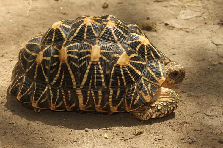 Справочный_материал_черепаха-002.jpg