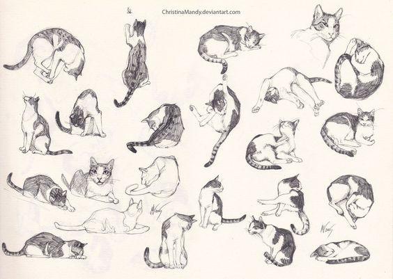 2 зад. зарисовки котов2.jpg