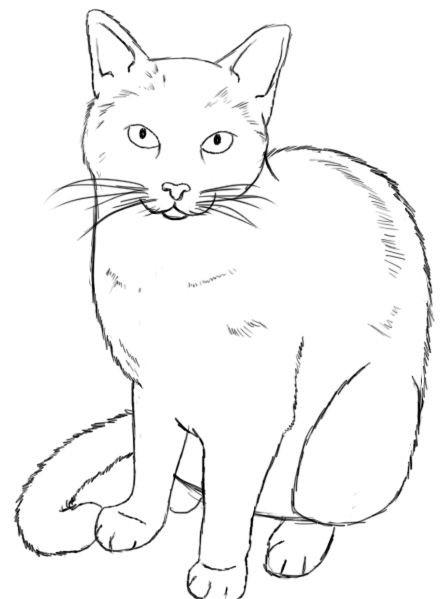 2 зад зарисовка кота.jpg
