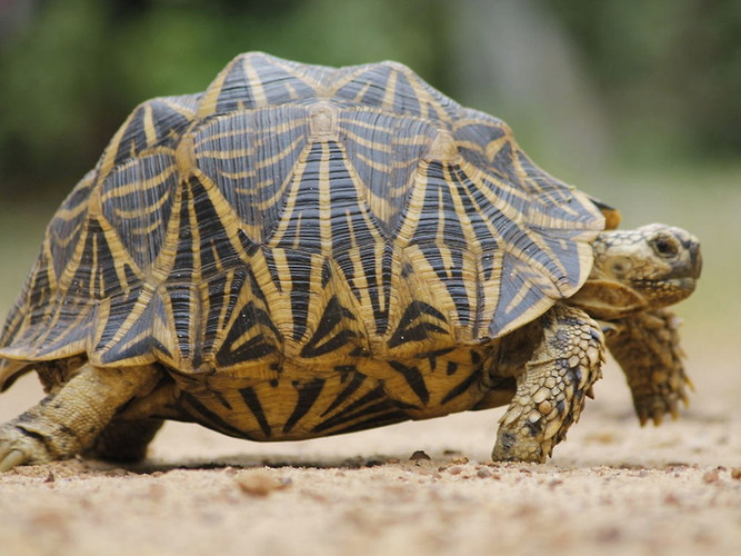 Справочный_материал_черепаха-001.jpg