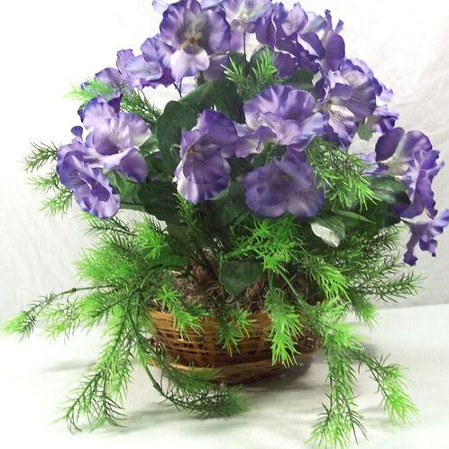 Purple Pansy's
