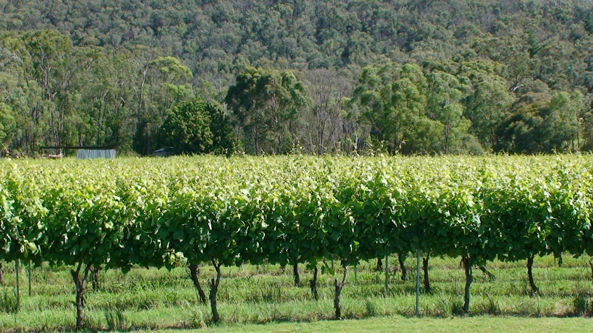 Winery 4.jpg