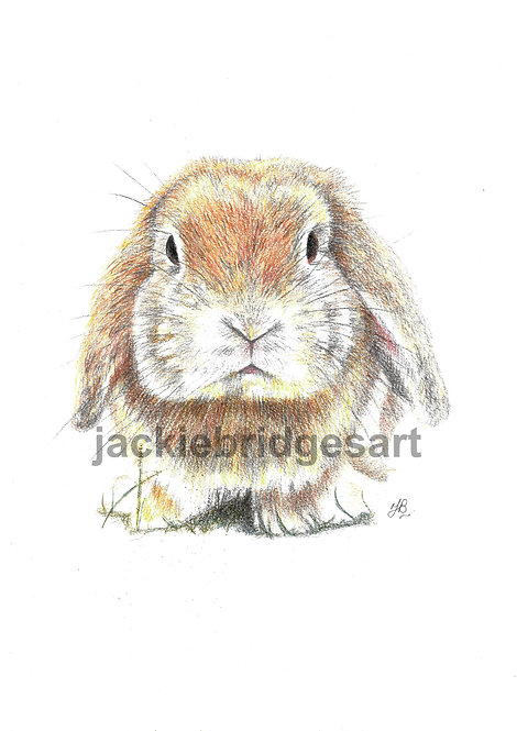 Bunny A4 Print