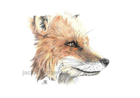 Fox A4 Print