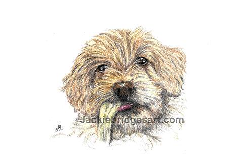 Cockapoo Puppy A4 Print