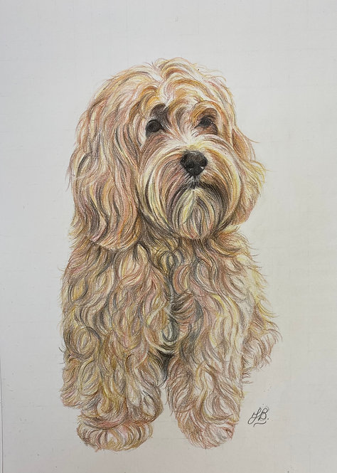 A4 Commissioned Pet drawings (Graphite Pencil)