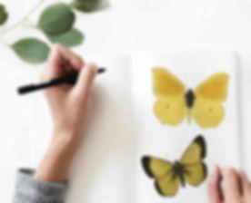 Sketching Butterflies