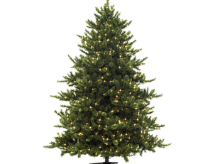 Volunteer at the Annual Wilson HS Booster Club Tree Sale