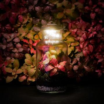 Lampje Floralux, zwart - Plantshop.jpg